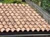 Überdachung einer Sitzecke im Garten mit mediterranen Halbschalen