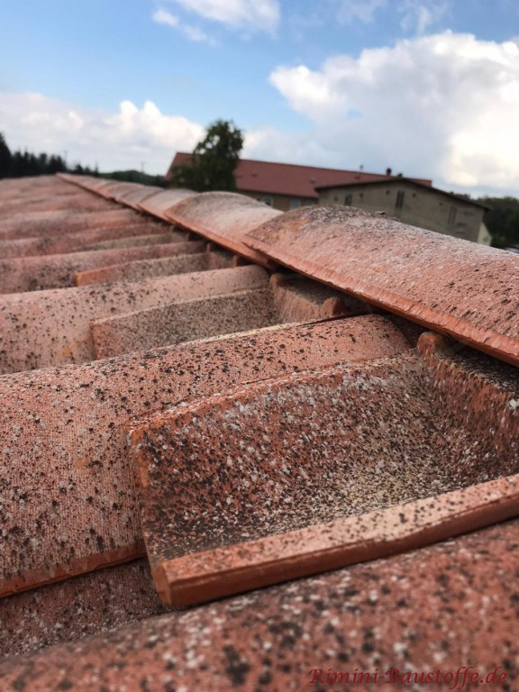 Firsteinleger Vogelschutz mediterraner Dachziegel San Marco