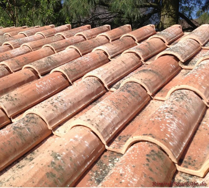 schöner antiker romanischer Dachziegel mit großem Wulst und handgestrichener Oberfläche