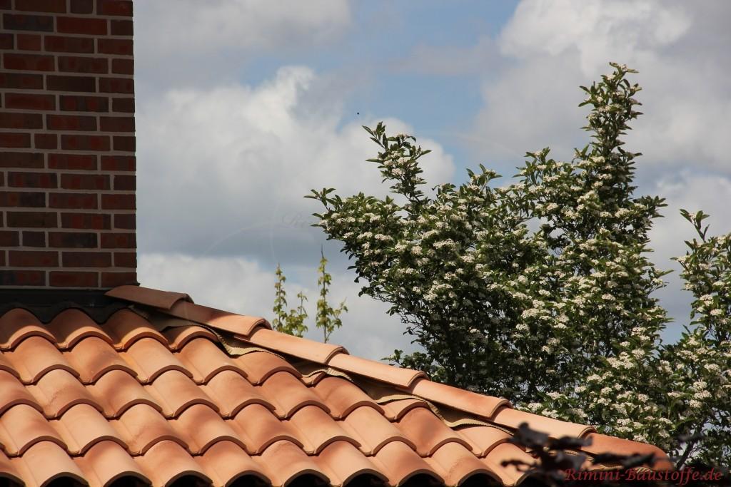 tolles beigefarbenes Gratband passend zum romanischen Dachziegel