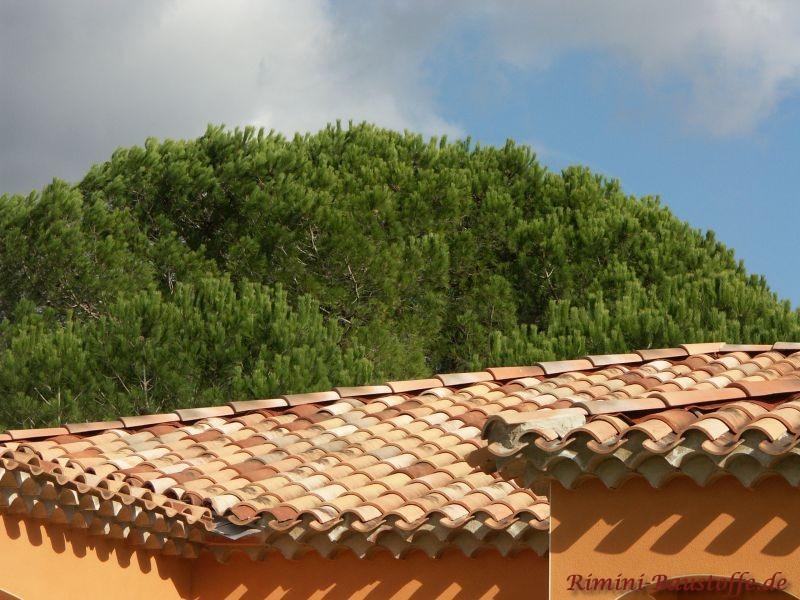 sehr schönes helles Dach im Kontrast zu den Bäumen im Hintergrund