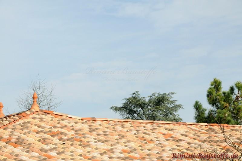 lebendiges Dach mit mediterranen Dachziegeln